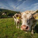 Europese subsidies dwarsbomen hervormingen in de landbouw