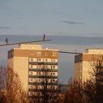Waarom de grote kloof tussen arm en rijk gevaarlijk kan zijn voor Duitsland