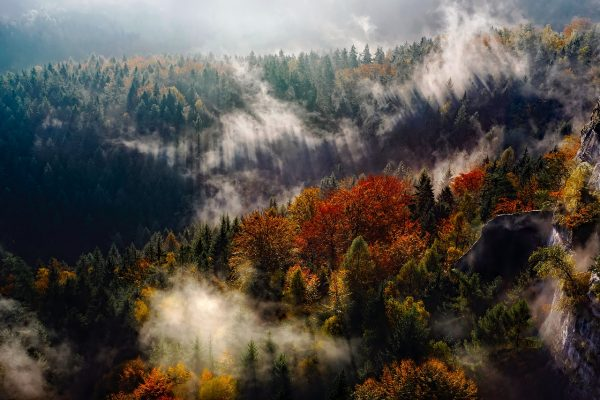 Duitse bos